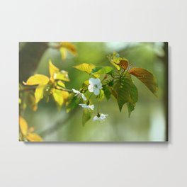 Delicate Spring Blossoms Metal Print