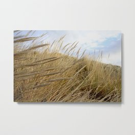 Grassy Dunes Metal Print