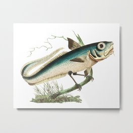 Fish Bird #2 Metal Print