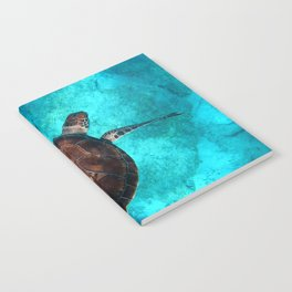 Sea Turtle Turquoise Photography in HD Notebook