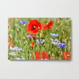 Alpin Cornflowers & Poppys Landscape Metal Print