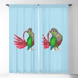 Preening green cheek conure Blackout Curtain