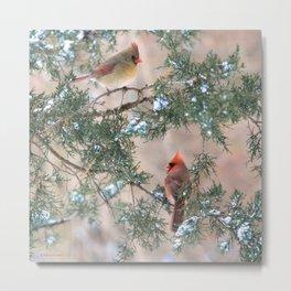 Winter Pair Cardinals (sq) Metal Print
