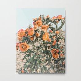 Cholla, Orange Flowering Cactus Metal Print