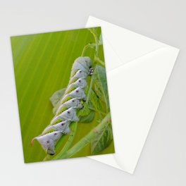 Tomato Horn Worm Stationery Cards
