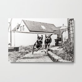 Dogs Have Fun At The Garden bw Metal Print