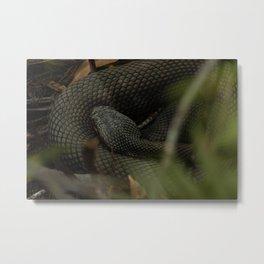 Hide and Snake Metal Print