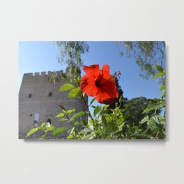 Flower at Kolossi (Limassol, Cyprus) Metal Print