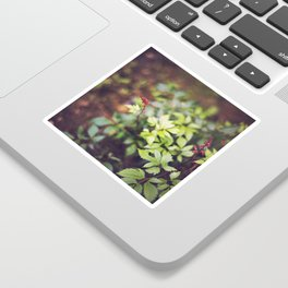 Red Snapdragon Flower from Above Sticker