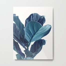 Fiddle Leaf Fig Plant, Blue Minimalist Nature Photography Metal Print