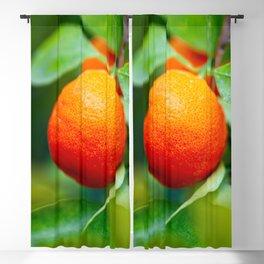 Orange Tangerine Or Mandarin Fruits On The Tree Blackout Curtain