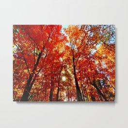 Sun in the Trees Metal Print