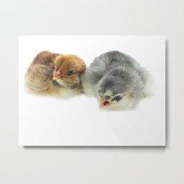 cute chicken Metal Print