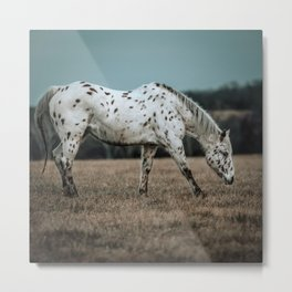 Leopard Appaloosa  Metal Print