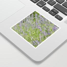 Lavender Bush Sticker