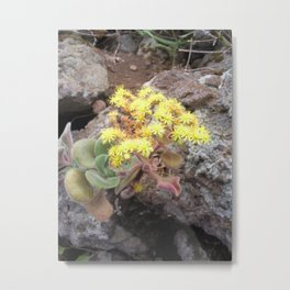 Blossoms of Tenerife Metal Print
