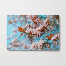 Cherry Cherry Spring Love Metal Print