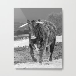 English Longhorn Black And White Metal Print