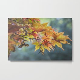 Yellow Acer Leaves Metal Print