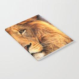 Wild Cat Glare Notebook