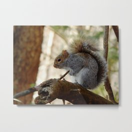 Timid one Metal Print