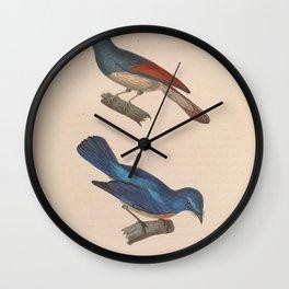 muscicapa elegans Rufous winged Philentoma5 Wall Clock