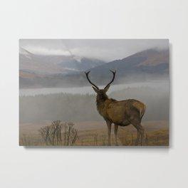 Highlands Stag Metal Print
