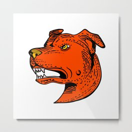 Angry American Staffordshire Bull Terrier Etching Color Metal Print