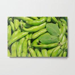 Fava bean pods Metal Print