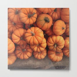 The Avant-Garden Forage || Pumpkins  Metal Print