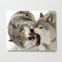 Laying down the law Metal Print