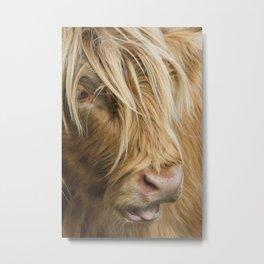 Highland Cow Portrait Metal Print