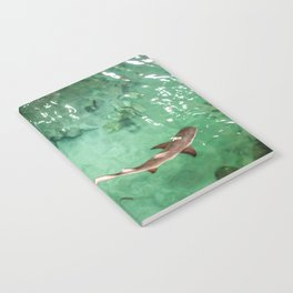 Look at the Shark Notebook