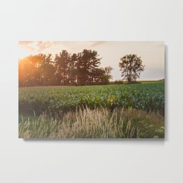 Sunsets and Corn Fields Metal Print