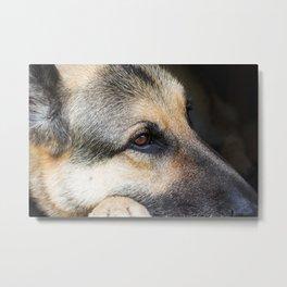 German Shepherd Dog 4 Metal Print