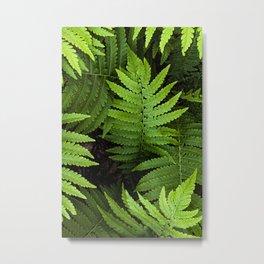 framed fern Metal Print