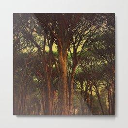 Dark Wood Metal Print