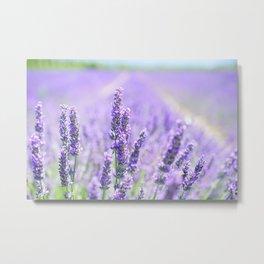 Lavender Blossom Flowers Landscape Metal Print