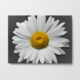Contemporary White Daisy on Grey Pop Of Yellow Art A490 Metal Print