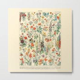 Wildflower Diagram // Fleurs II by Adolphe Millot 19th Century Artsy Floral Science Flower Artwork Metal Print