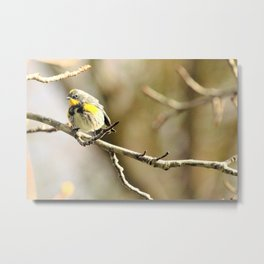 Pretty Little Yellow Warbler by Reay of Light Metal Print