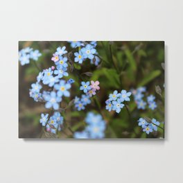 Pink and Blue Forget-Me-Nots Metal Print