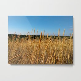 In the fields Metal Print