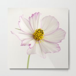 Sensation Cosmos White and Pink Metal Print