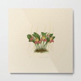 File:R. Warner & B.S. Williams - The Orchid Album - vol 01 - plate 005 Metal Print