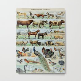 Farm Animals Vintage Scientific Illustration French Language Encyclopedia Lithographs Educational Metal Print