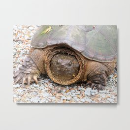 Snapping Turtle1-face forward Metal Print