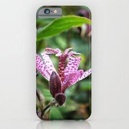 Liliaceae iPhone Case