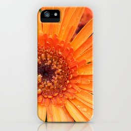 Orange Gerber Daisy after the Rain iPhone Case