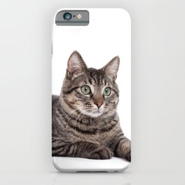 Cute Tabby Cat iPhone Case